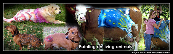 animal painting, painting on real animals, malerei auf echten Tieren, Tierbodypainting, tierbodypaint, kunst am Tier mit dermatologisch geprüften und verträglichen hautverträglichen